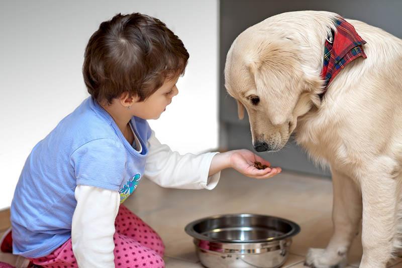 süßer Junge füttert seinen Hund