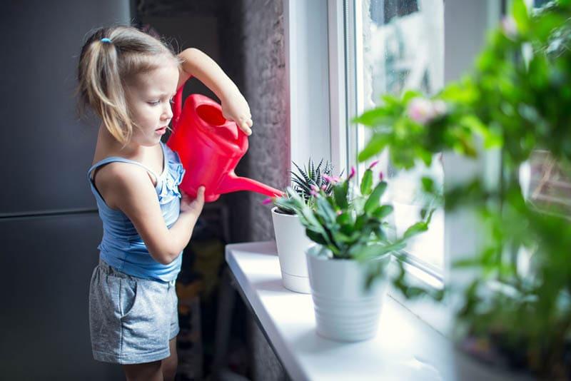 süßes Mädchen, das Blumen am Fenster wässert