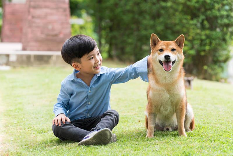 süßer kleiner Junge streichelt seinen Hund im Gras