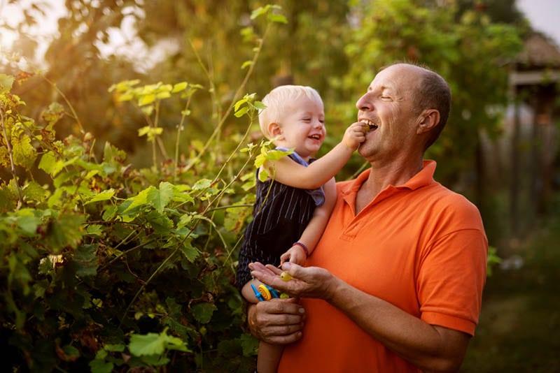 Enkel füttert seinen Großvater mit Trauben