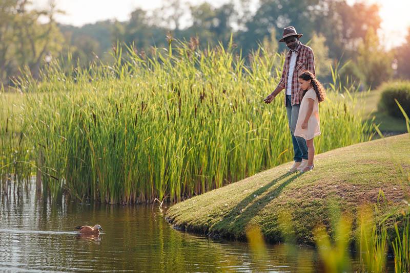 Enkelin und ihr Großvater füttern Ente auf See im Park