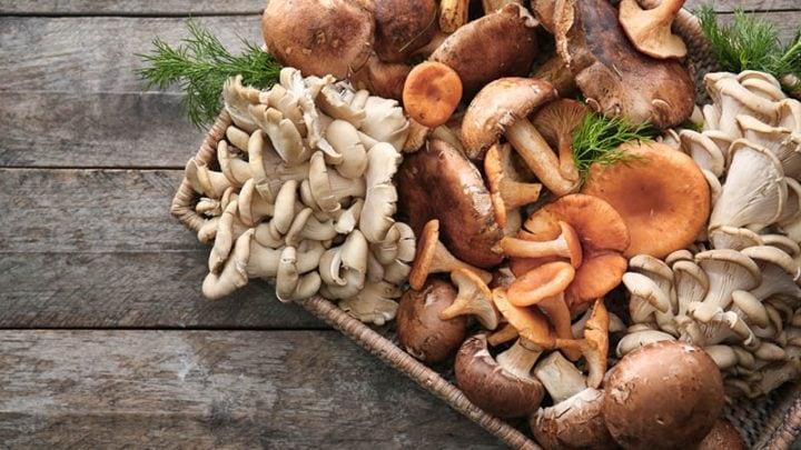 Pilze In Der Schwangerschaft – Besondere Vorsicht Vor Wildpilzen