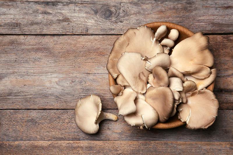 Schale mit köstlichen Bio-Austernpilzen auf Holztisch