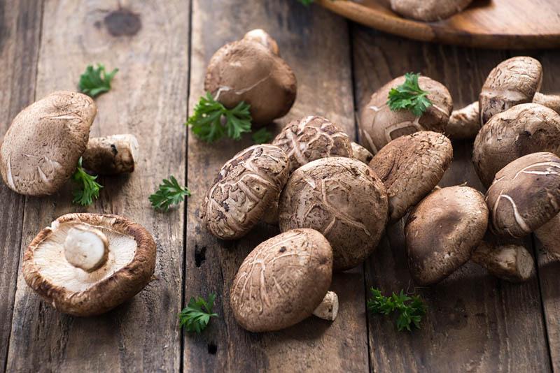 Shiitake Pilz auf Holztisch