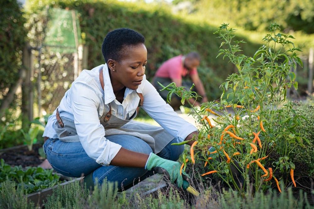 Frau kümmert sich um die Pflanzen in ihrem Garten