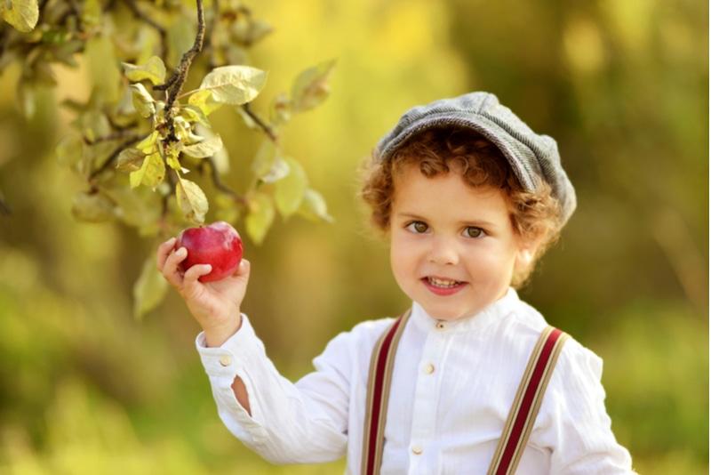 Kleiner lockiger Junge mit Mütze pflückt einen Apfel vom Baum