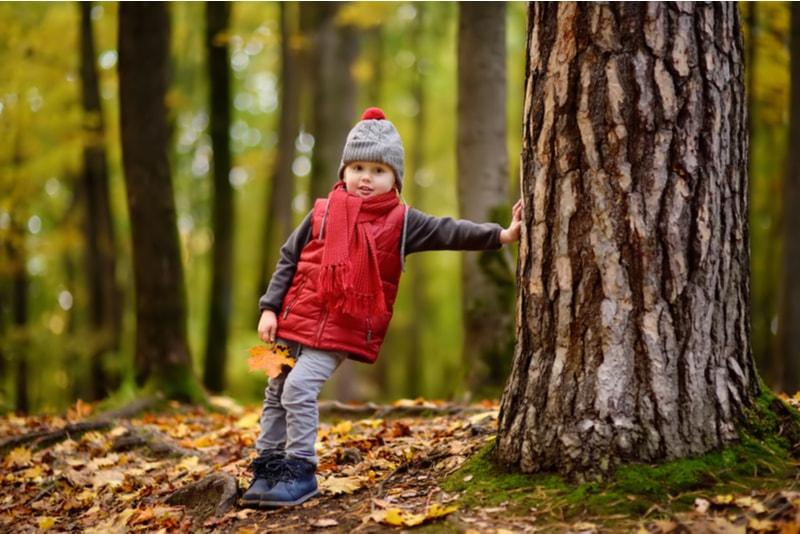 Kleiner Junge im Wald am sonnigen Herbsttag